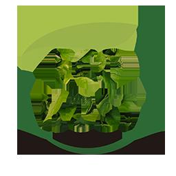 Eco Host
